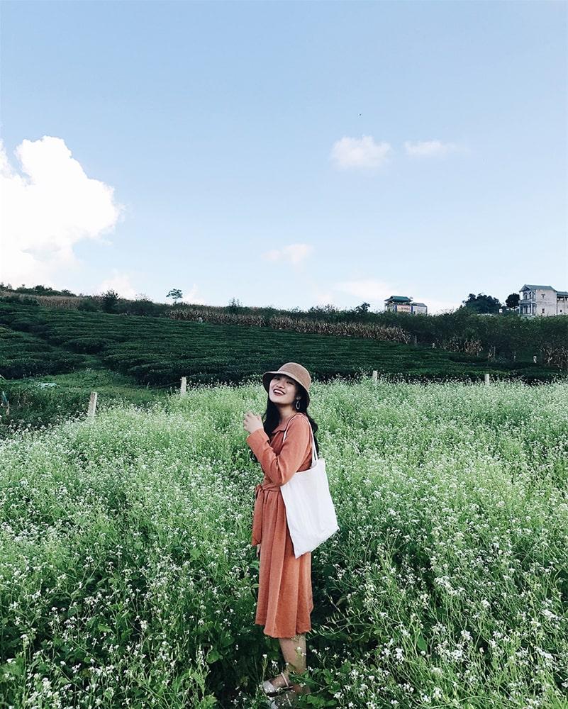 Visit Moc Chau to see white cauliflower